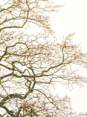 Noche bajo el árbol caído